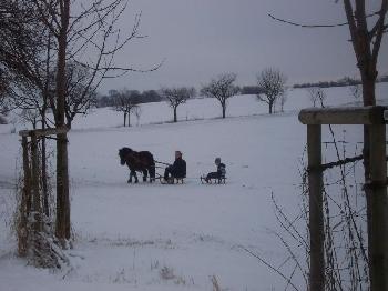 Wie man sieht, kann man nicht nur auf dem Rücken der Pferde einen Ausflug unternehmen. Cordula und Fabian haben bei dieser Schlittenfahrt eine Menge Spaß.